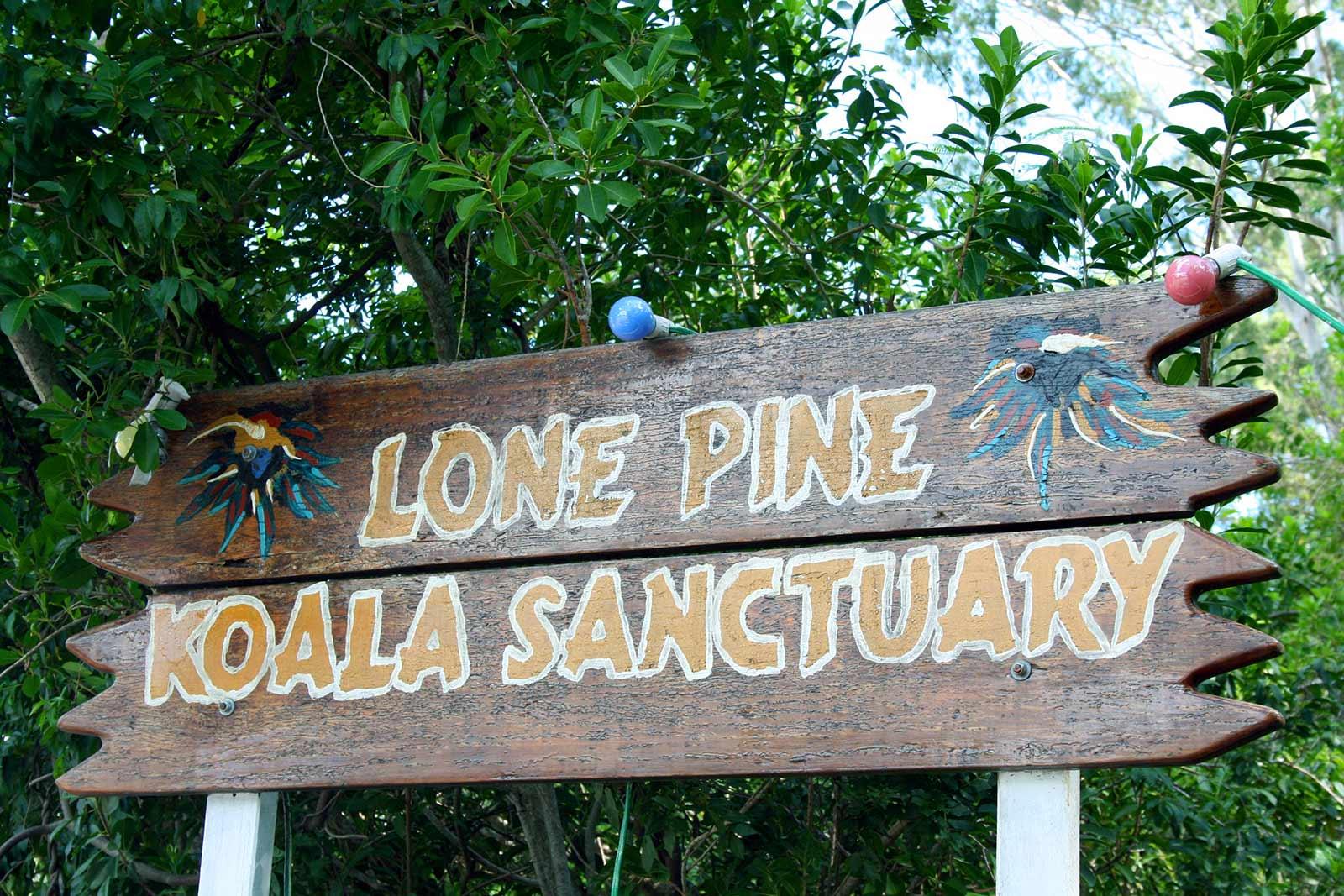 Sehenswürdigkeiten in Brisbane, Australien: Lone Pine Koala Sanctuary