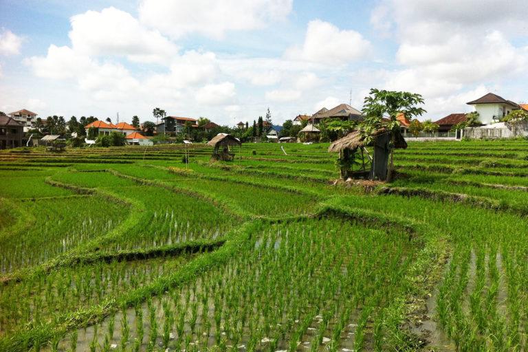 Trauminsel Bali, Reisfelder wohin man fährt
