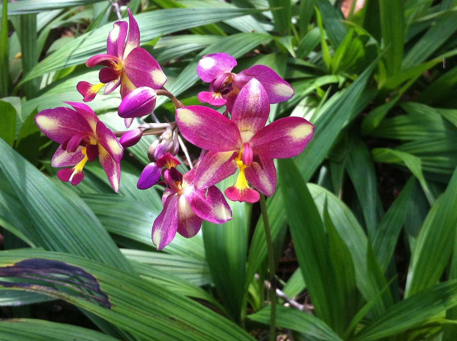 Sehenswürdigkeiten in Singapur; Botanischer Garten Singapur