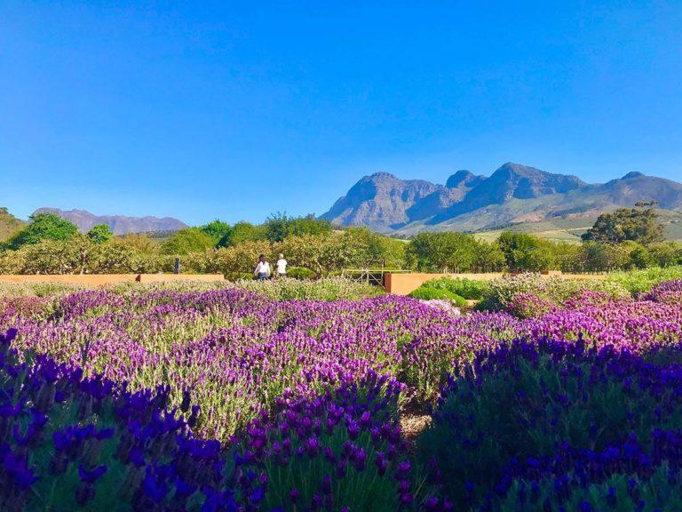 Reisetipps für Kapstadt: Babylonstoren
