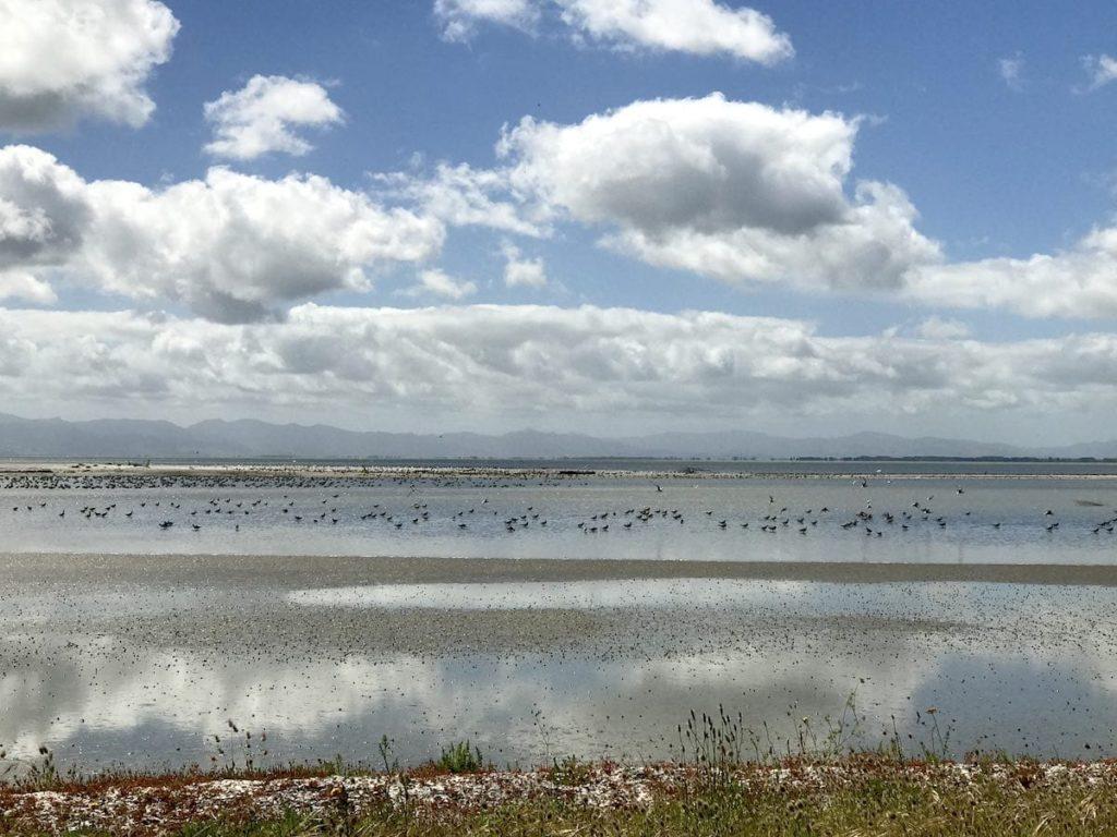 Miranda Shorebird Center; Roadtrip durch Neuseelands Nordinsel; Neuseeland Rundreise; Roadtrip Neuseeland Route