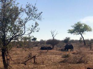 Safari Packliste Südafrika; Krüger Nationalpark Safari