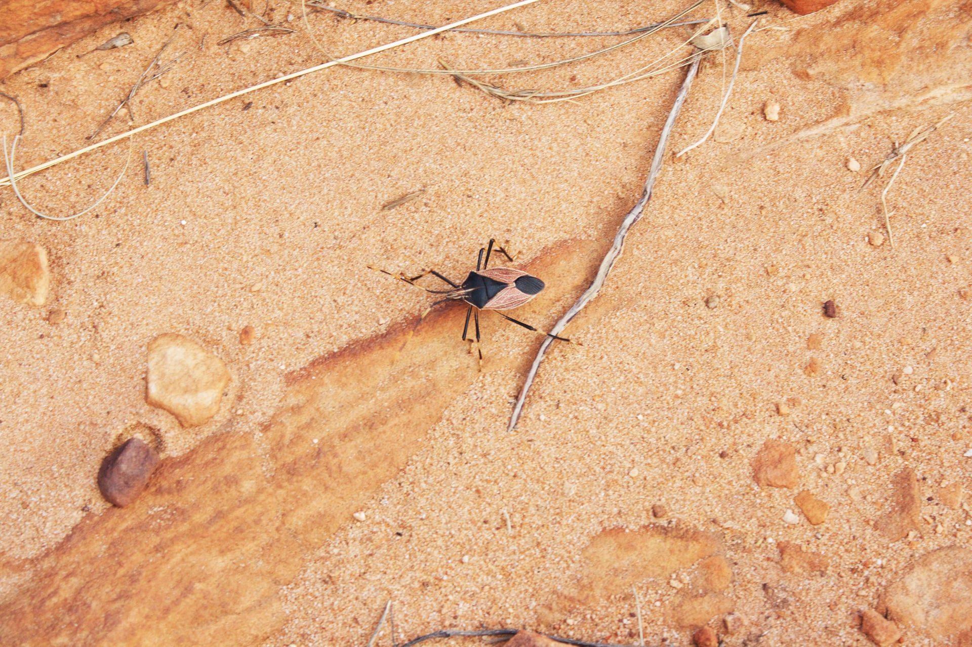 Reise Podcast Australien Tierwelt
